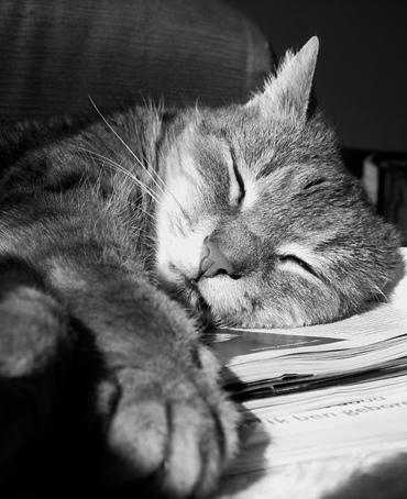 http://siio.jp/cat.jpg